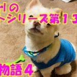 【大海物語4】実践パチンコバイト 第134回
