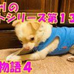 【大海物語4】実践パチンコバイト 第135回