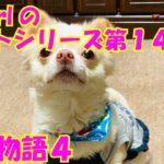 【大海物語4】実践パチンコバイト 第141回