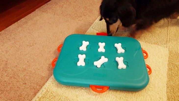 ニーナオットソンの知育おもちゃで遊んでみた~カジノver.~